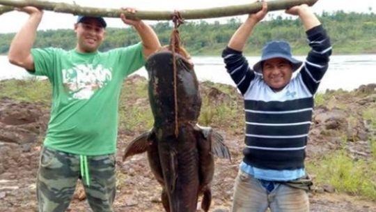 Pescaron un manguruyú de 80 kilos y no lo devolvieron al agua